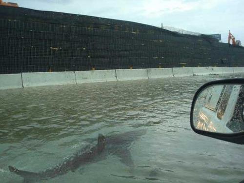 Shark Fake
